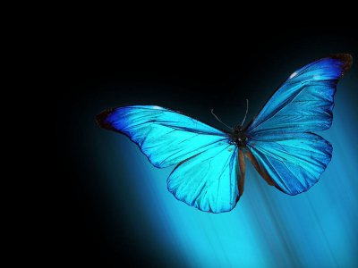 Vista-Morpho-Blue-Butterfly-Resolution